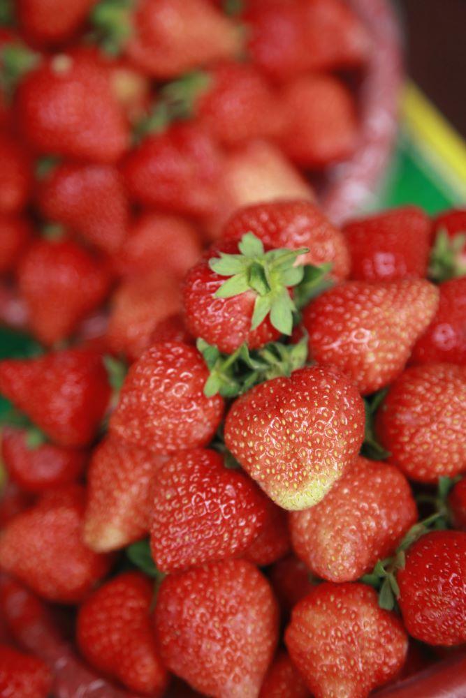 strawberry picking in Cambridge
